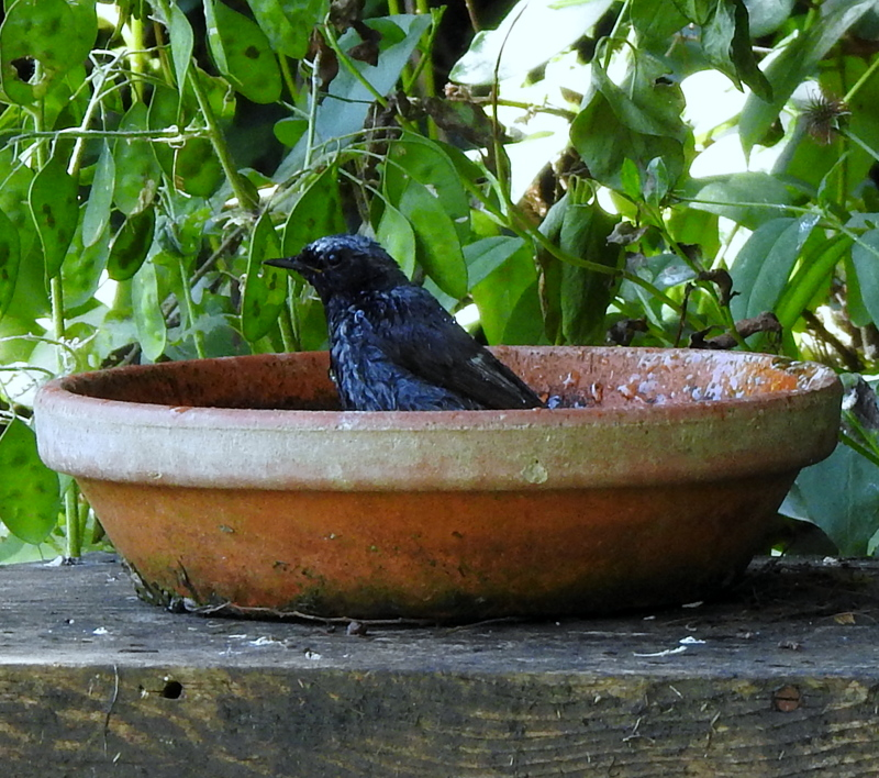 oiseaux .... Dscn0517