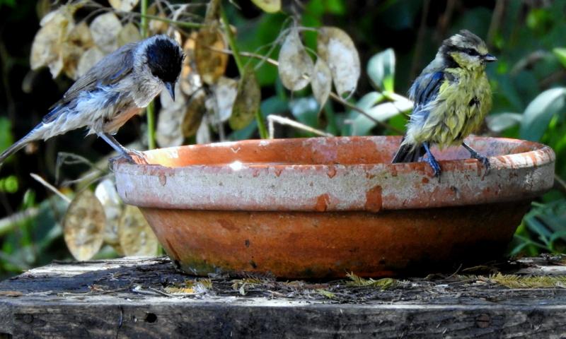 oiseaux .... Dscn0811