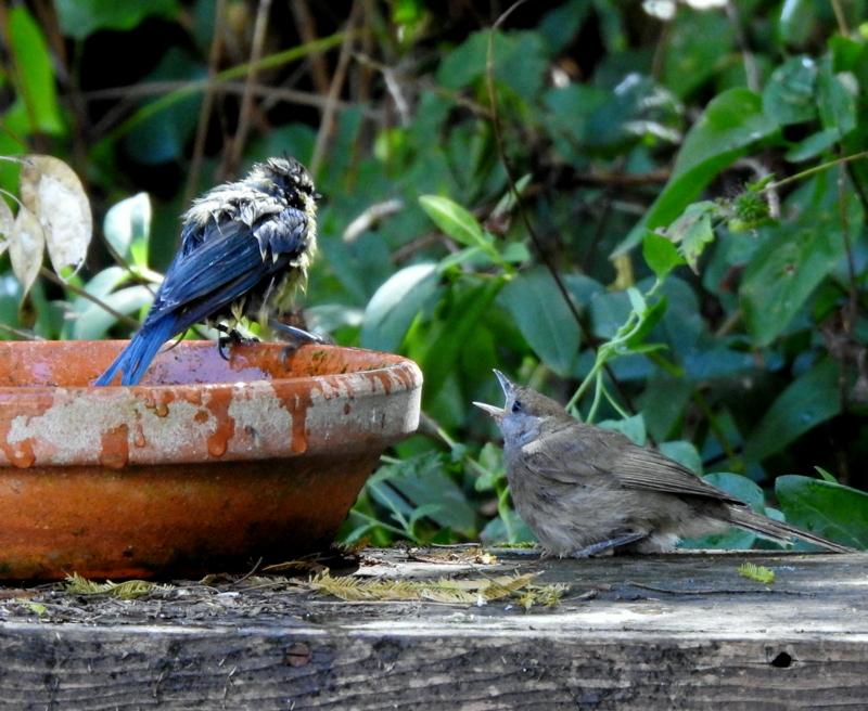 oiseaux .... Dscn0812