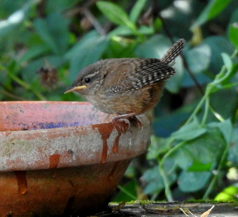 oiseaux .... Dscn0813