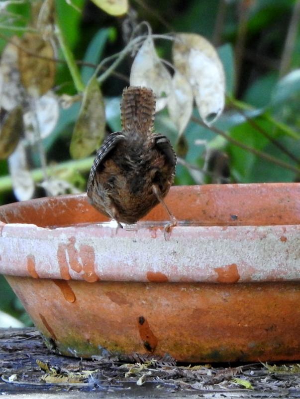 oiseaux .... Dscn0814