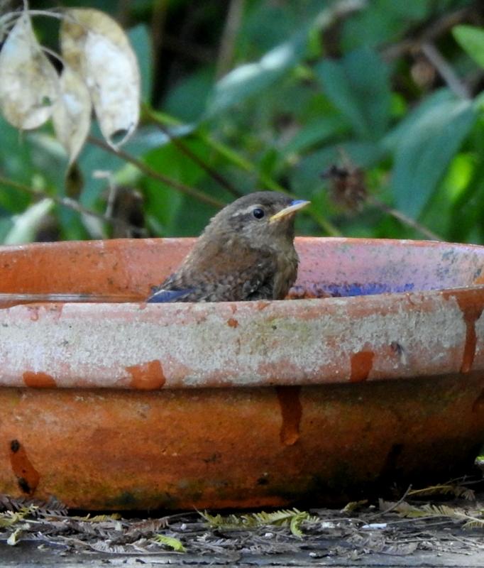 oiseaux .... Dscn0815