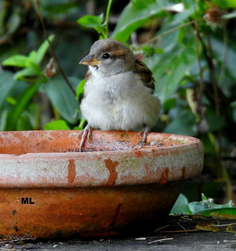 oiseaux .... Dscn0910