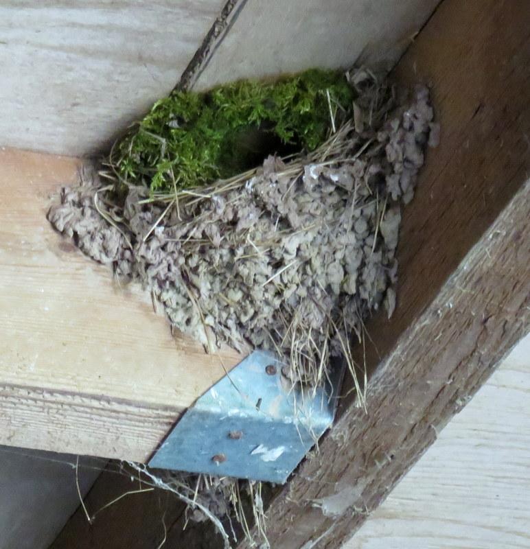 oiseaux .... Img_4821