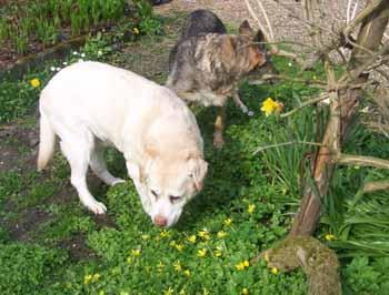 Un très beau dimanche de Pâques (12 avril 2009) Be-fle12