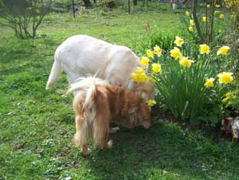 Un très beau dimanche de Pâques (12 avril 2009) Be-fle15