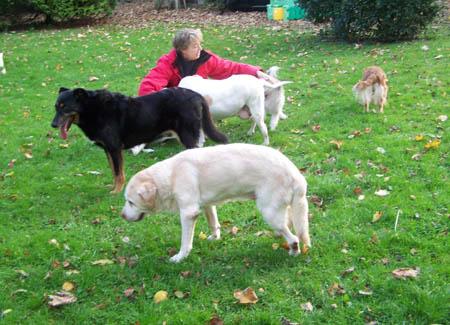 Bea et les chiens de Cani-Nursing Bea-ch10