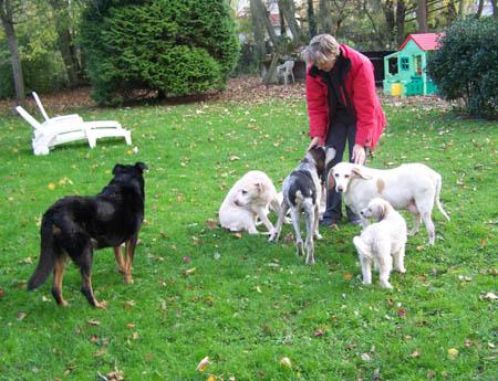 Bea et les chiens de Cani-Nursing Bea-ch12