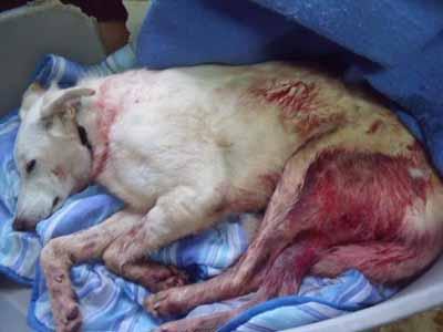 URGENT - chien à sauver en Espagne Blanqu10
