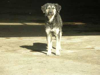 SOS pour 8 chiens dans un garage(dept. 59) Chiens11
