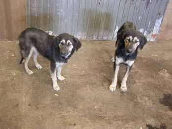 SOS pour 8 chiens dans un garage(dept. 59) Chiens14