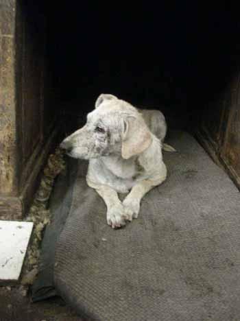 SOS pour 8 chiens dans un garage(dept. 59) Chiens16