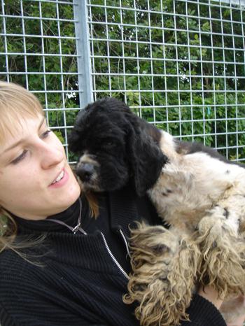 Une cinquantaine de chiens à sauver d'urgence dans la meuse (55) Cocker14