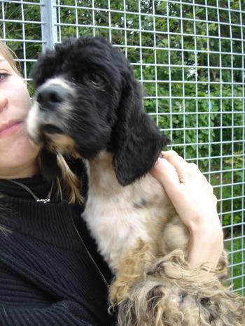 Une cinquantaine de chiens à sauver d'urgence dans la meuse (55) Cocker15