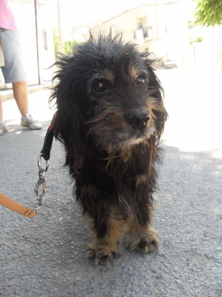 SVP pour CUQUI 12 ans - à l'adoption - aveugle et sourd : CUENCA Espana - SAUVE - Cuqui-11