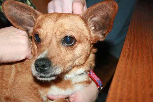 DALTON est adopté (28 décembre 2008) Dalton11