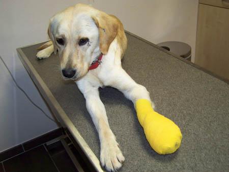 Visite vétérinaire en urgence (7 novembre 2009) Dy-tab10