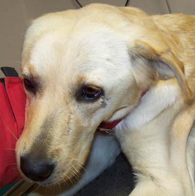 Visite vétérinaire en urgence (7 novembre 2009) Dy-tet10