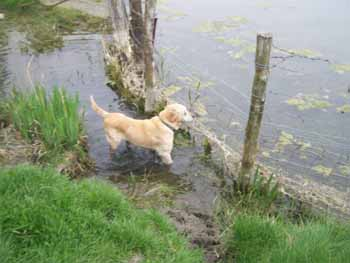 ELSA est une vraie Labrador (13 avril 2009) + VIDEOS El-lac11