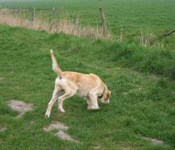 ELSA est une vraie Labrador (13 avril 2009) + VIDEOS El-lac17