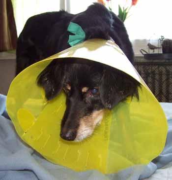 Suivi vétérinaire (5 avril 2009) Fo-col10