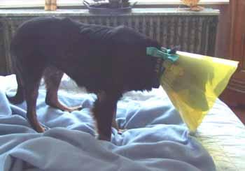 Suivi vétérinaire (5 avril 2009) Fo-col11