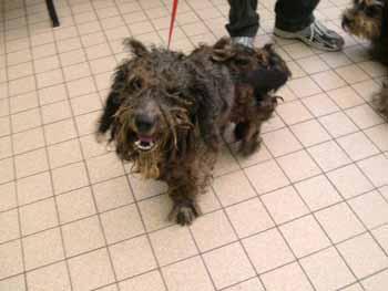 4 pauvres chiens à Béthune Grif-b10