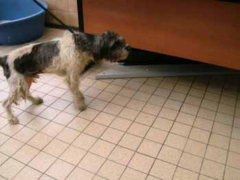 4 pauvres chiens à Béthune Grif-b11