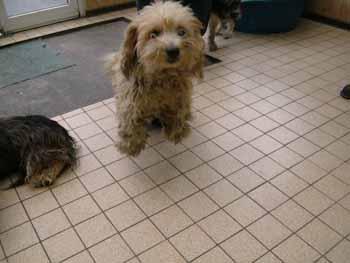 4 pauvres chiens à Béthune Grif-b12