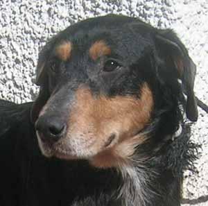 2 chiens retirés à leur propriétaire - Page 2 Heraul10