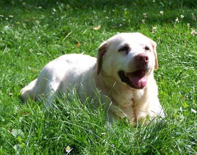 Après-midi au jardin (13 août 2009) Herbe-14