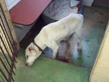 Saisie de 4 chiens par la SPA de Dunkerque, hier... Ly-box10