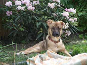 Visite à MAXIMA (24 mai 2009) Ma-jar13