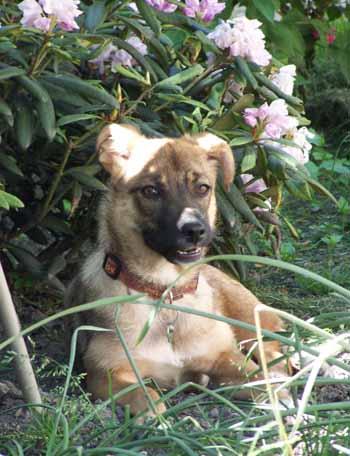 Visite à MAXIMA (24 mai 2009) Ma-jar14