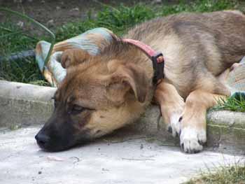 Visite à MAXIMA (24 mai 2009) Ma-jar16