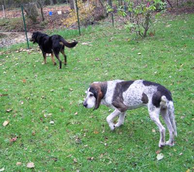 Balade au jardin (22 novembre 2009) Ma-jar18