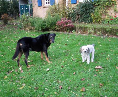 Promenade au jardin, chez maritche (14 novembre 2009) Max-ja11