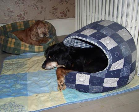 Tite FOSSETTE (27 octobre 2009) Panier49