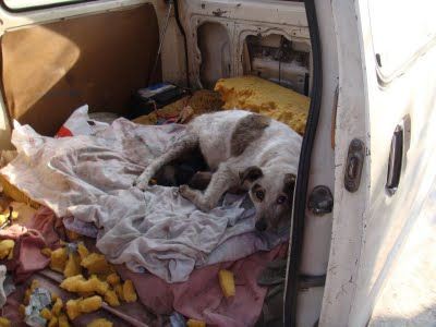 Maman et ses bébés à sauver, en Espagne... Perri_10
