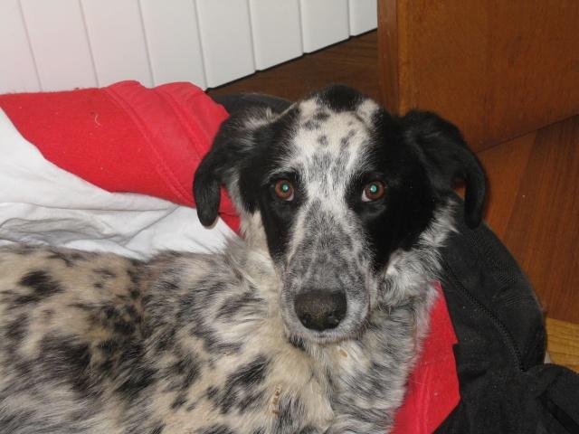 Hommage à un pauvre chien que je devais prendre en accueil Pongo-12