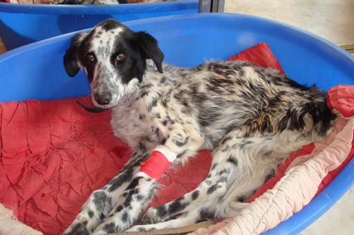 Hommage à un pauvre chien que je devais prendre en accueil Pongo-15