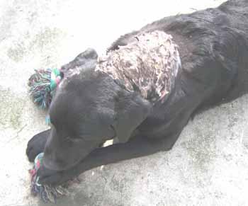 RONNIE le lépreux (19 avril 2009) Ro-cro11