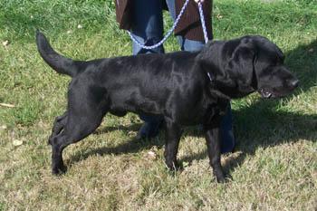 RONNIE est réservé (17 septembre 2009) Ro-sep11