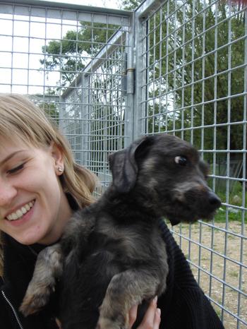 Une cinquantaine de chiens à sauver d'urgence dans la meuse (55) Teckel12