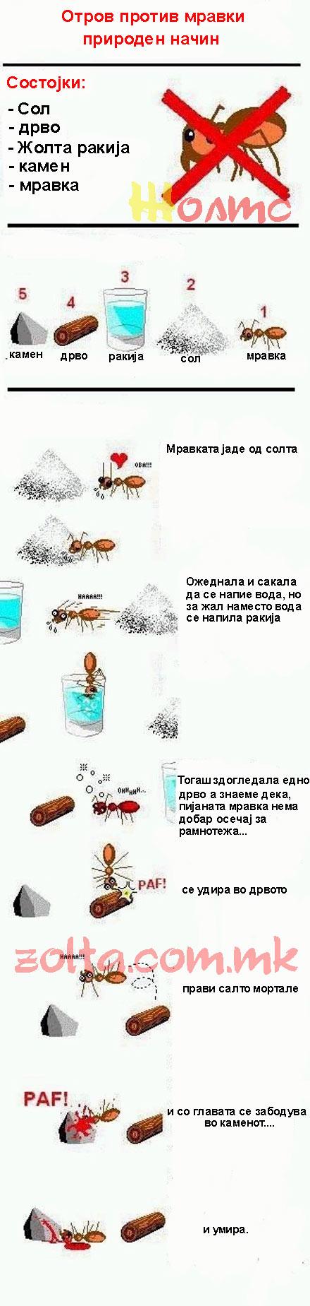 Како да ја убијам мравката ! 20090311