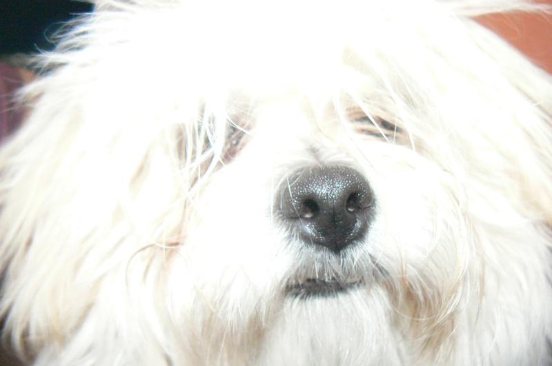 Les chiens de Marie Antoinette P1050210