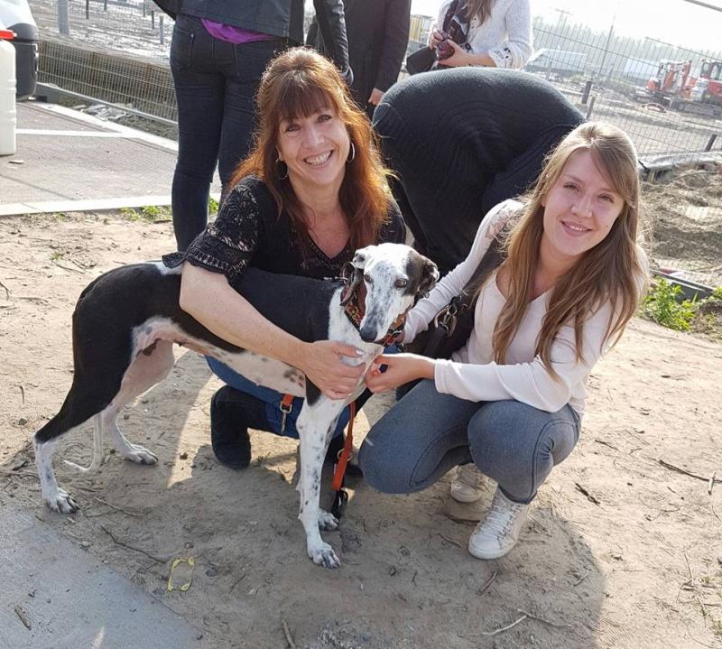 Lacama, galga noire et blanche, 3 ans Scooby France Adoptée  Lacama11
