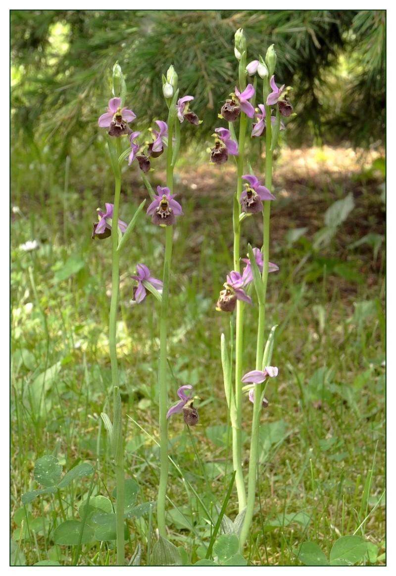 Quand les orchidées s'invitent à la maison Dsc02210