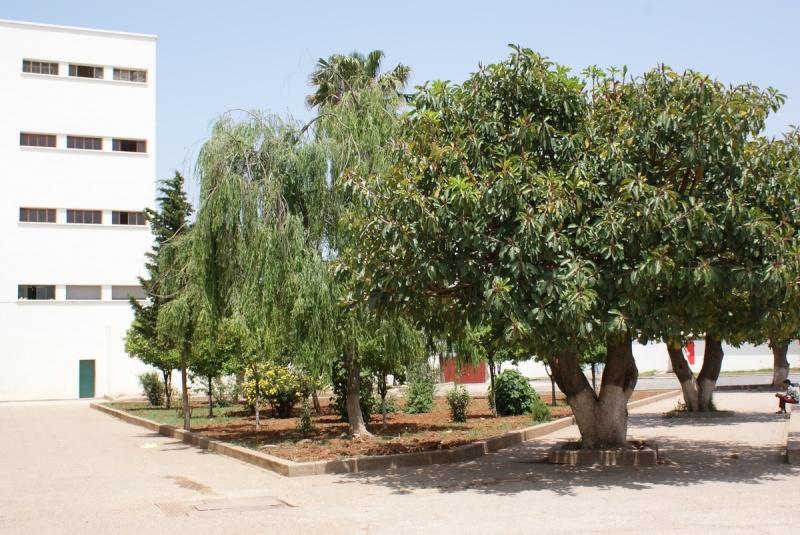 Mai 2009 - Meknès au coeur -  - Page 2 2009_m64