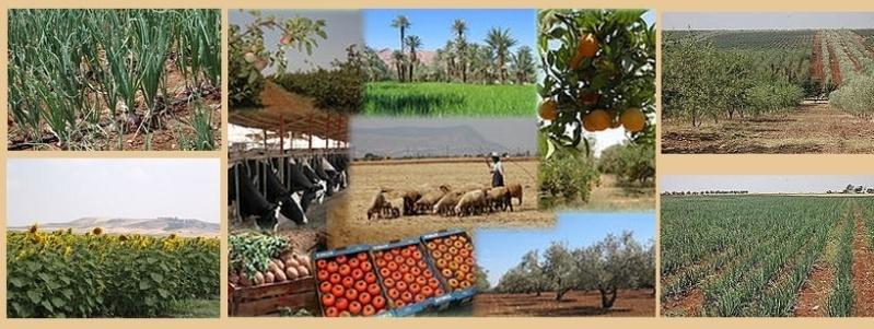 Fermes Agricoles, Viticoles, Région de Meknès Agrico10